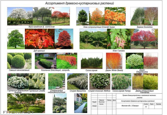 древесные+ кустарниковые растения