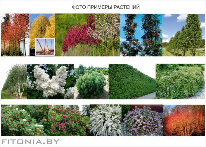ассортимент растений на участке