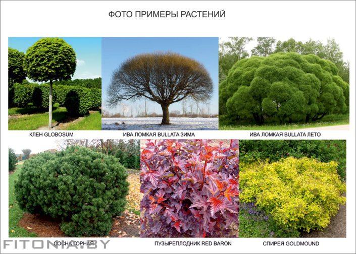 кусты деревья на участке 15 соток