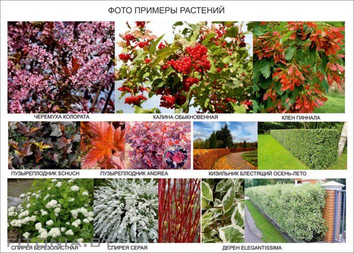 фото примеров растений в проект
